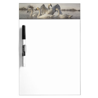 Trumpeter Swans in the Madison River in winter Dry-Erase Board