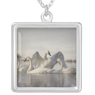 Trumpeter Swans in the Madison River in winter Silver Plated Necklace