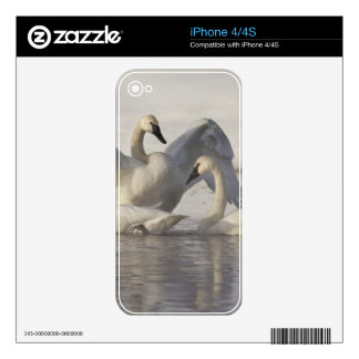 Trumpeter Swans in the Madison River in winter Decal For iPhone 4S