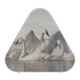 Trumpeter Swans in the Madison River in winter Speaker