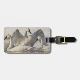Trumpeter Swans in the Madison River in winter Tag For Luggage