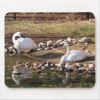 Trumpeter Swans Mouse Mat