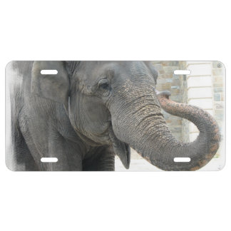 Trumpeting Elephant License Plate