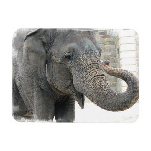 Trumpeting Elephant Premium Magnet Flexible Magnet