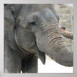 Trumpeting Elephant Print