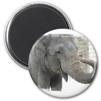 Trumpeting Elephant Round Button Magnets