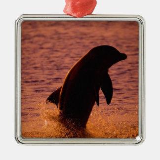 Truncatus del Tursiops de los delfínes de Adorno Navideño Cuadrado De Metal