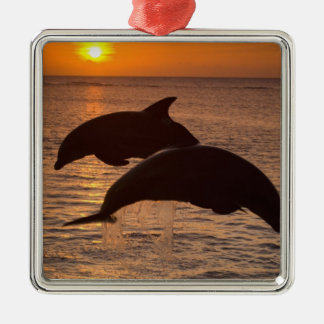 Truncatus) del Tursiops de los delfínes de Adorno Navideño Cuadrado De Metal