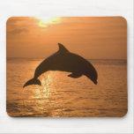 Truncatus) del Tursiops de los delfínes de Bottlen Alfombrillas De Ratón