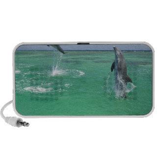 Truncatus) del Tursiops de los delfínes de Bottlen Altavoz De Viaje