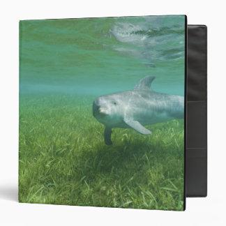"Truncatus) del Tursiops de los delfínes de Bottlen Carpeta 1 1/2"""