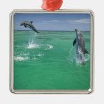 Truncatus) del Tursiops de los delfínes de Bottlen Adorno De Navidad