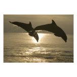 Truncatus) del Tursiops de los delfínes de Bottlen Arte Fotografico