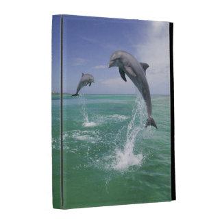 Truncatus) del Tursiops de los delfínes de Bottlen