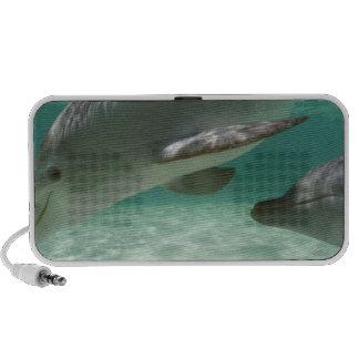 Truncatus) del Tursiops de los delfínes de Bottlen iPhone Altavoces