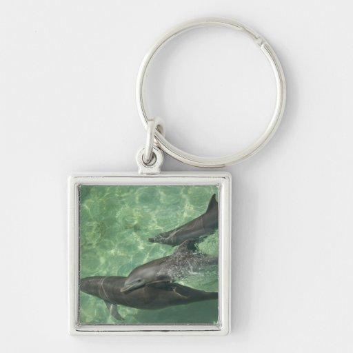 Truncatus) del Tursiops de los delfínes de Bottlen Llavero Cuadrado Plateado