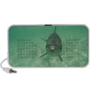 Truncatus) del Tursiops de los delfínes de Bottlen Mini Altavoz