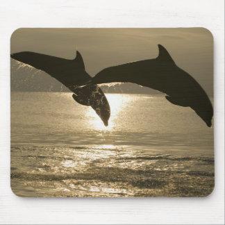 Truncatus) del Tursiops de los delfínes de Bottlen Mouse Pads