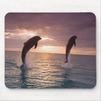 Truncatus) del Tursiops de los delfínes de Bottlen Mousepads