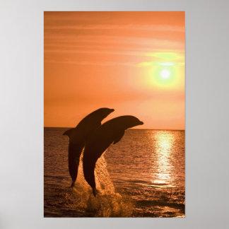 Truncatus) del Tursiops de los delfínes de Bottlen Impresiones