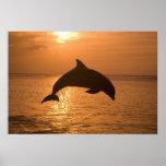Truncatus) del Tursiops de los delfínes de Bottlen Posters