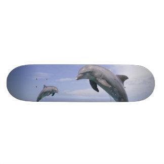"""Truncatus) del Tursiops de los delfínes de Bottlen Patineta 7 1/4"""""""