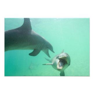 Truncatus) del Tursiops de los delfínes de Bottlen Fotografía