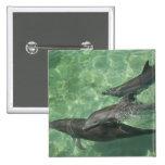 Truncatus) del Tursiops de los delfínes de Bottlen Pin Cuadrada 5 Cm