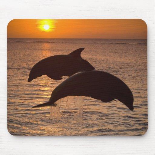 Truncatus) del Tursiops de los delfínes de Bottlen Tapete De Ratones