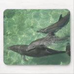 Truncatus) del Tursiops de los delfínes de Bottlen Tapetes De Raton