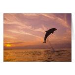Truncatus) del Tursiops de los delfínes de Bottlen Tarjetas