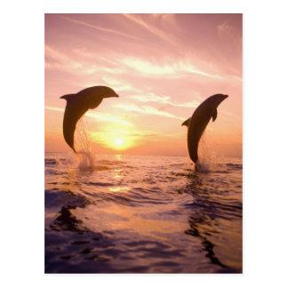 Truncatus) del Tursiops de los delfínes de Bottlen Tarjeta Postal