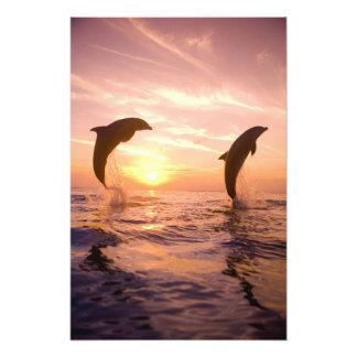 Truncatus del Tursiops de los delfínes de Bottleno Fotografía