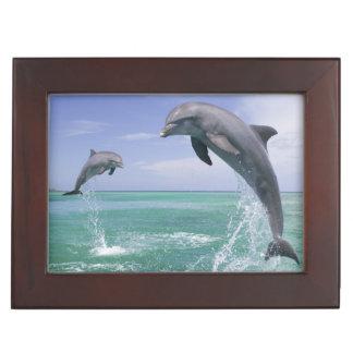 Truncatus) del Tursiops de los delfínes de Caja De Recuerdos