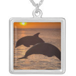 Truncatus) del Tursiops de los delfínes de Colgante Cuadrado