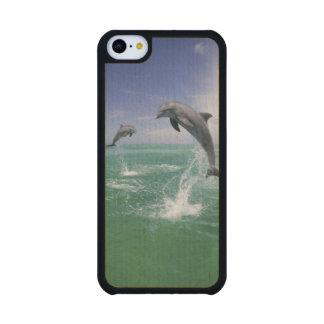 Truncatus) del Tursiops de los delfínes de Funda De iPhone 5C Slim Arce