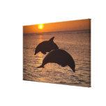 Truncatus) del Tursiops de los delfínes de Impresión En Lienzo