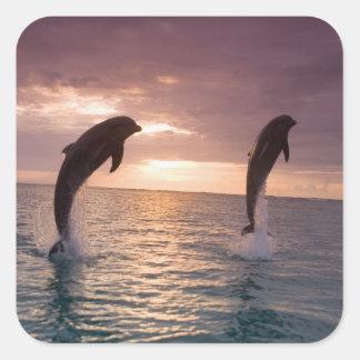 Truncatus) del Tursiops de los delfínes de Calcomania Cuadrada Personalizada