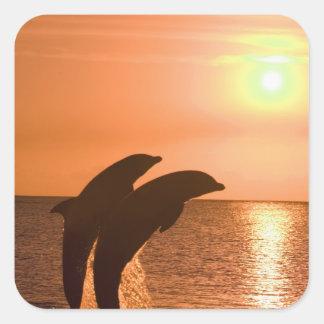 Truncatus) del Tursiops de los delfínes de Calcomania Cuadradas
