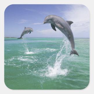 Truncatus) del Tursiops de los delfínes de Pegatina Cuadrada