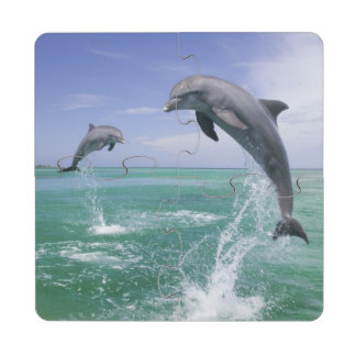 Truncatus) del Tursiops de los delfínes de Posavasos De Puzzle