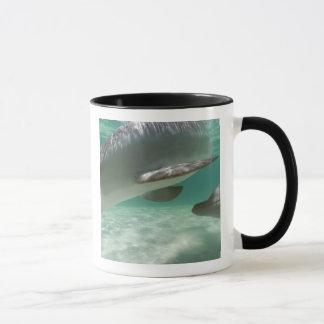 Truncatus) del Tursiops de los delfínes de Taza