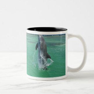 Truncatus) del Tursiops de los delfínes de Taza De Café De Dos Colores
