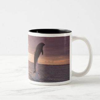 Truncatus) del Tursiops de los delfínes de Taza De Dos Tonos