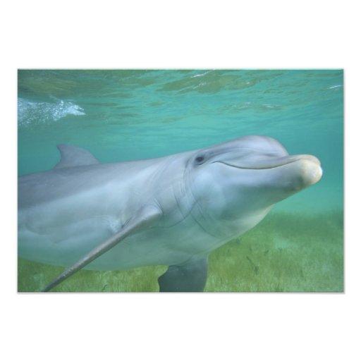 Truncatus del Tursiops del delfín de Bottlenose), Fotografías