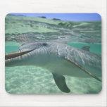 Truncatus del Tursiops del delfín de Bottlenose),  Tapetes De Ratones
