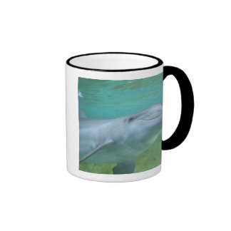 Truncatus del Tursiops del delfín de Bottlenose Tazas