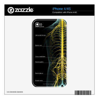 Trunk Nerve Supply iPhone 4S Skin