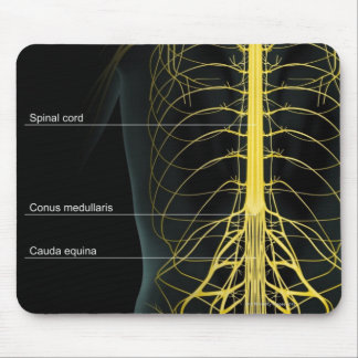 Trunk Nerve Supply Mouse Pad