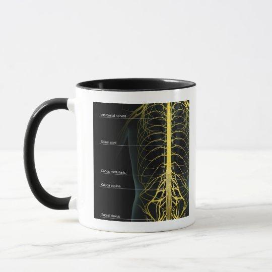Trunk Nerve Supply Mug